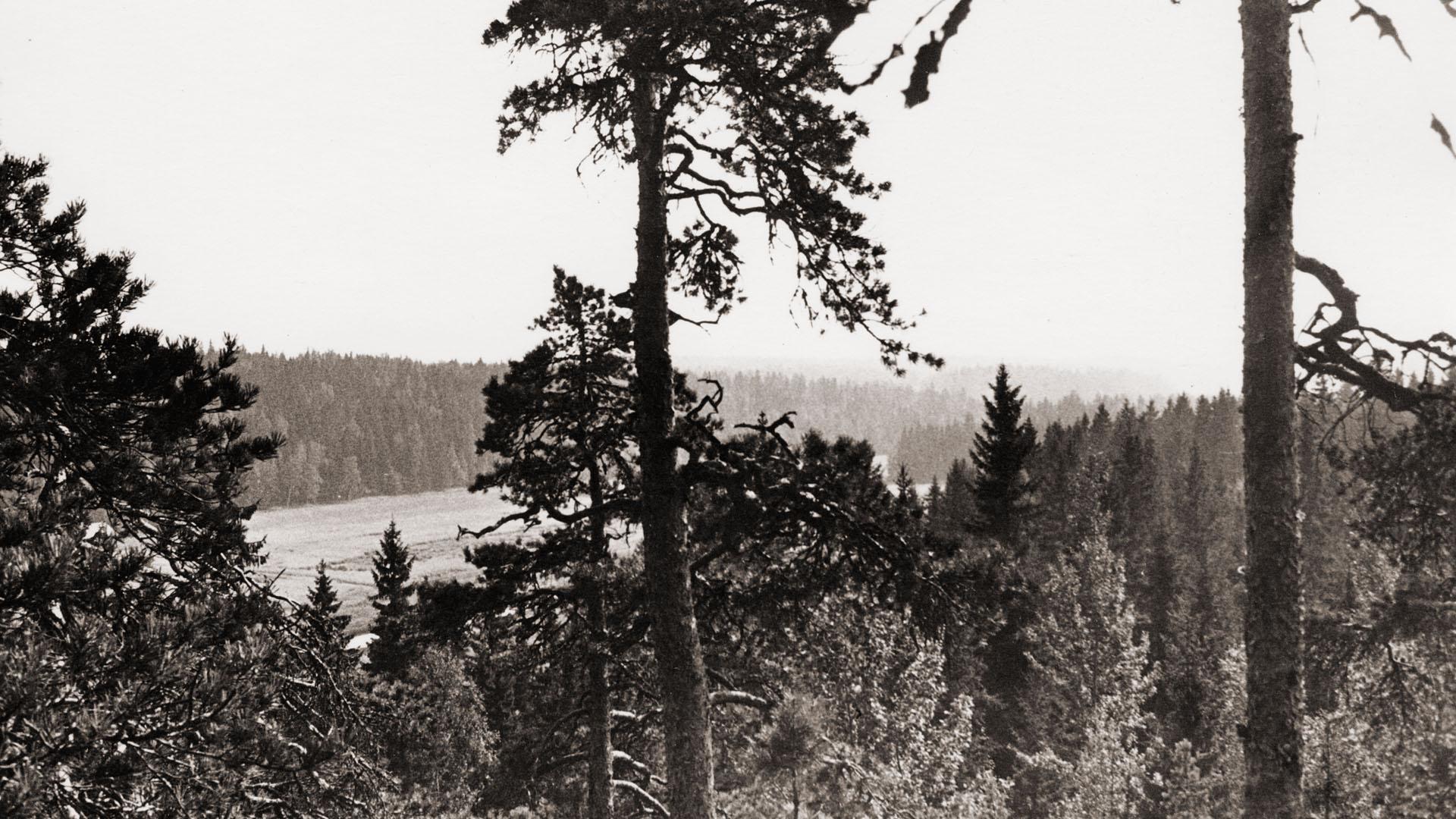 Askolan Hiidenkirnuilta on upea näkymä Porvoonjokilaaksoon